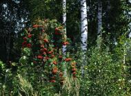 jesien-skansen-kolbuszowa-2015-07.jpg